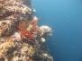 Bali, Menjangan, Underwater cave, 26 avril 2016