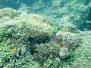 Philippines, Balicasag Island, 4 mai 2010