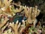 Philippines, Mandarins, 7 mai 2010